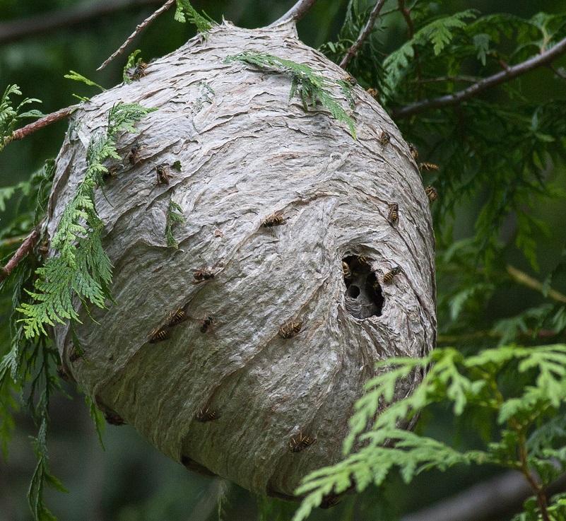Vosí hnízda - likvidace